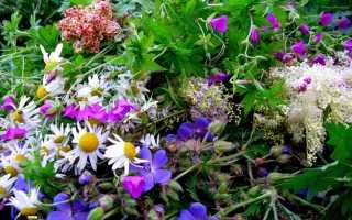Эффективные травы для лечения печени и поджелудочной железы