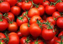 Можно ли пациентам есть помидоры при панкреатите