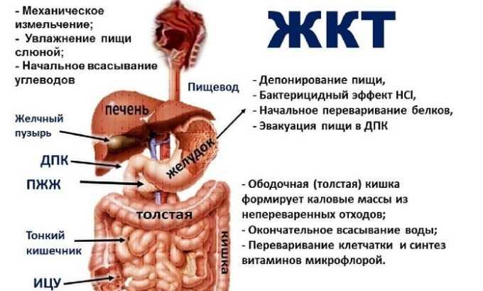 Болезни желудочно-кишечного тракта могут послужить появлению панкреатита