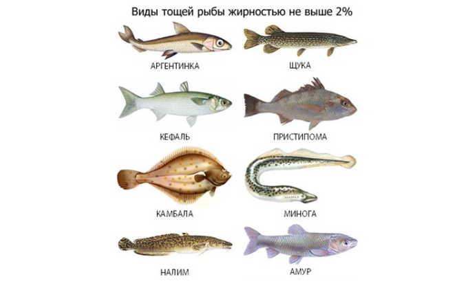При хроническом панкреатите стоит воздержаться от блюд из жирной рыбы, поскольку она способна спровоцировать обострение