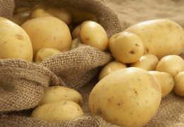 Употребление картофеля при остром и хроническом панкреатите