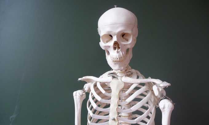 Кальций отвечает за крепость костного скелета