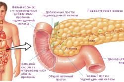 Строение и расположение поджелудочной железы