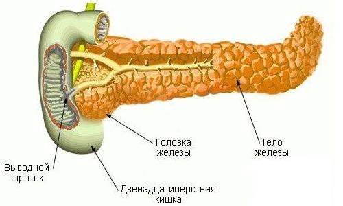 Поджелудочная железа - самый труднодоступный для исследования орган