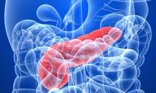 Эластаза - это фермент, который синтезируется в поджелудочной железе при поступлении пищи и выделяется из организма вместе с калом