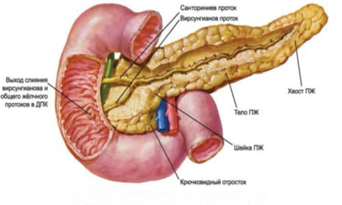Иногда врач наблюдает у больного увеличение поджелудочной железы при диагностике некоторых заболеваний пищеварения